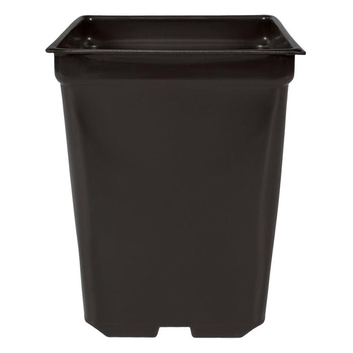 DL 5.5 X 5.5 X 6 Square 2 Quart Square Pot - 200 CASE